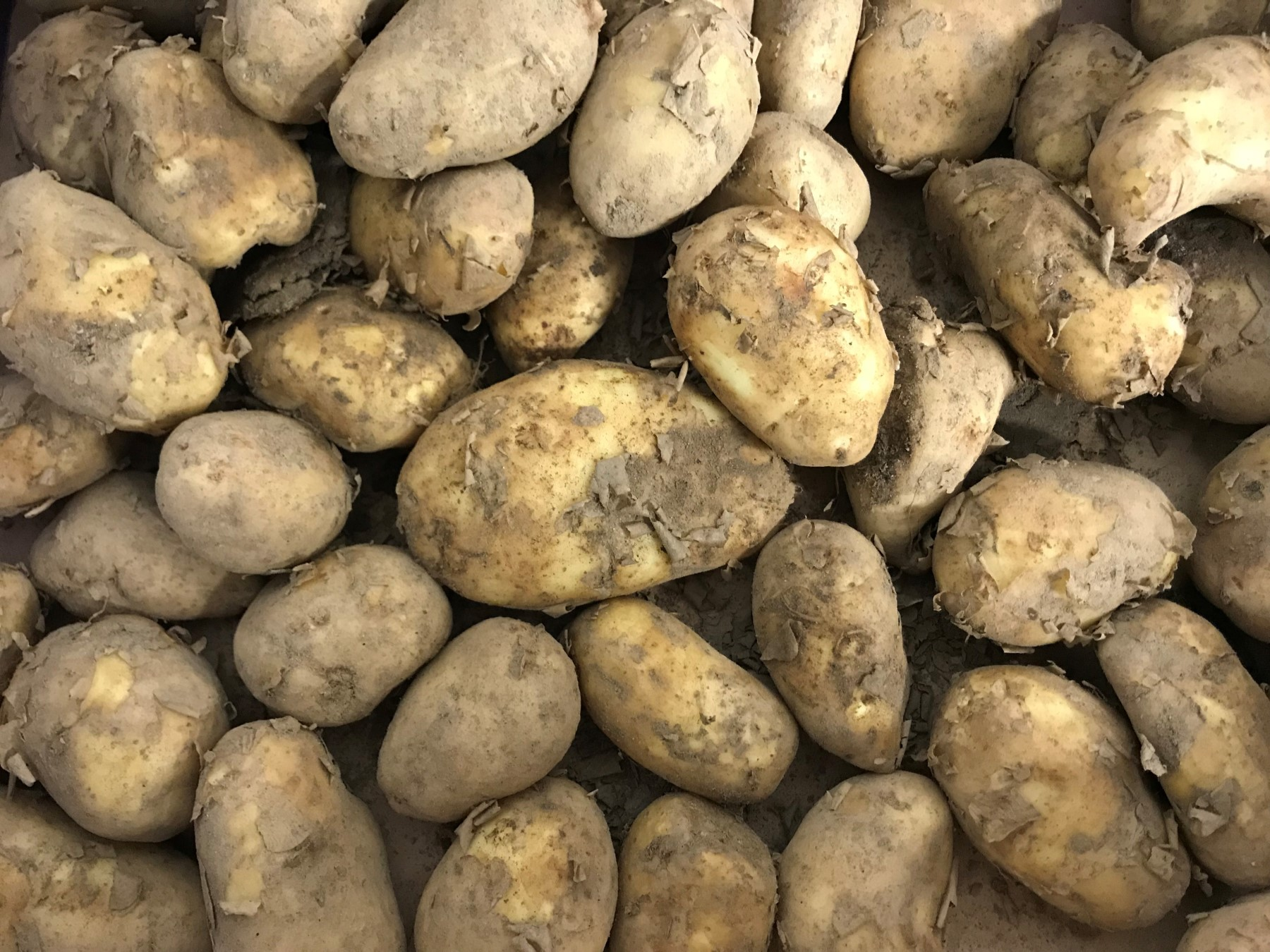 Early New Potatoes
